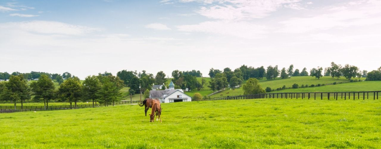 Photo of a white farmhouse in the distance with horse